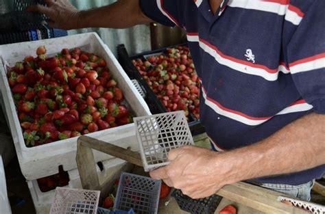 ingresos exentos para agricultores 2015 ingresos exentos para agricultores