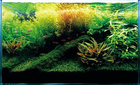 Aquascape Ada by Nature Aquarium Starting From Zero Ada Nature Aquarium