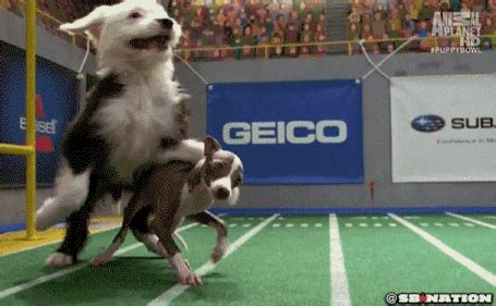 puppy bowl locker room puppy bowl coach s locker room speech is the pup rally we all need before the big barkpost