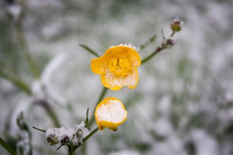 fiore di neve ospitalit 224 171 falode it