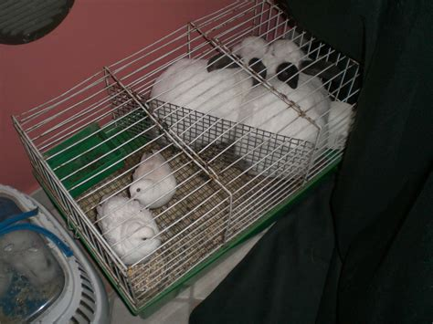 gabbie grandi per conigli lasciamo i conigli fuori dal cilindro addestrare conigli