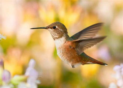 palomar audubon society
