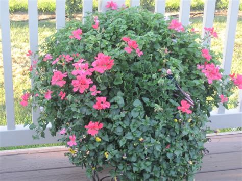 You To See Flower Garden Container Flower Garden Container Flower Garden Pinterest