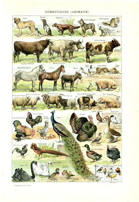 French Livingroom 1908 old domesticated animals print pets farm animals