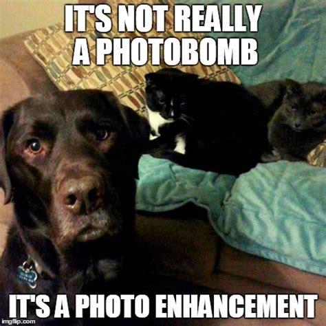 Labrador Meme - labrador imgflip