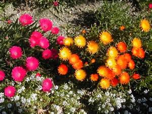 drought tolerant native garden blog planting a drought
