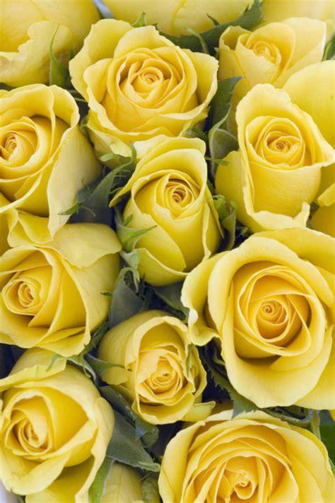 il significato dei colori dei fiori linguaggio dei fiori scopri il significato dei colori