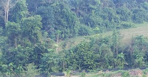 Furadan Durian warisan pesagi kebun kung lompat jun 2017