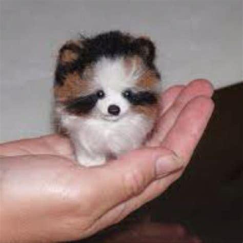 pomeranian teacup needle felted custom pet portrait your pet in miniature exle pomeranian