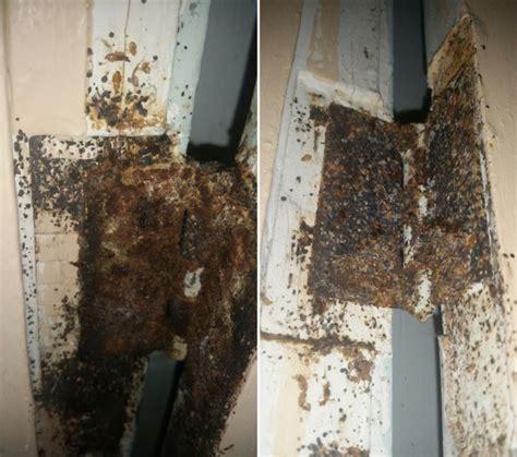 Find Bed Bug Nest
