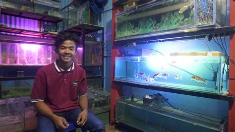 warna warni bisnis ikan hias  bojonegoro jurnaba
