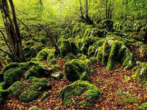 imagenes de otoño naturales aralar natural park spot gipuzkoa