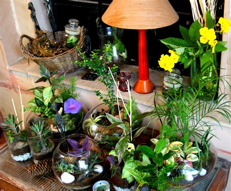 indoor plants arrangement ideas terrariums noida ozziesterrariums