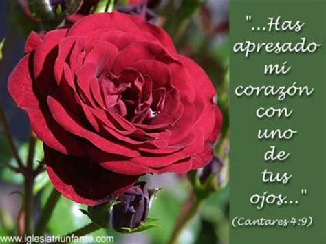 la rossa la rosa sar 243 n coro de sevilla
