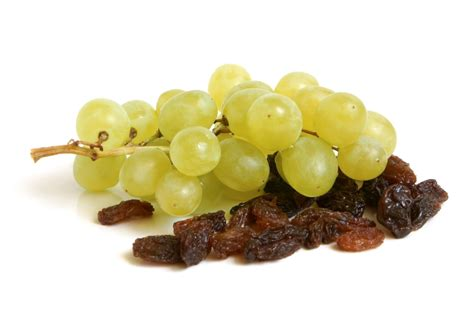 are grapes poisonous to dogs dangers the day after petswell pantry