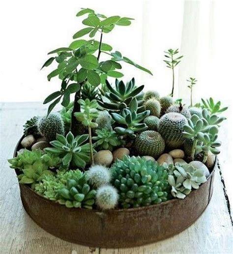 25 best ideas about indoor cactus on pinterest cactus indoor cactus plants and cactus plants