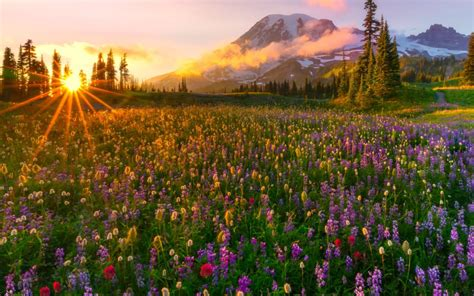 sunset   rays  sun spring meadow wild flowers