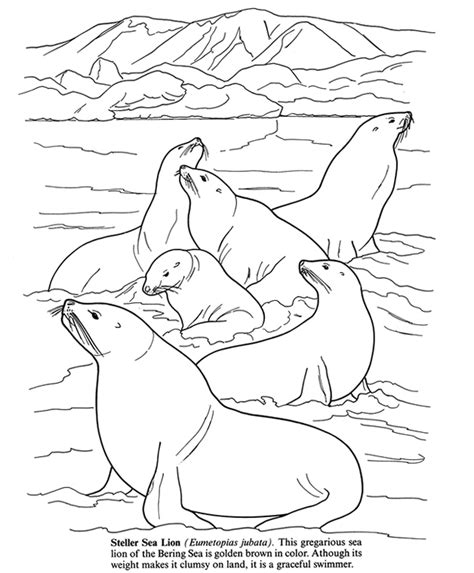 free coloring pages of arctic antarctic anials