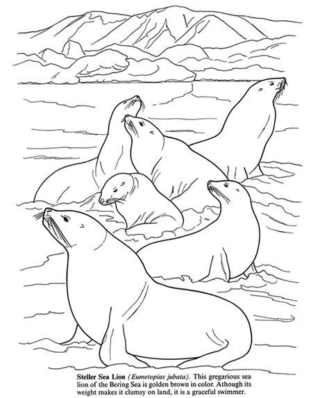 arctic habitat animals coloring pages arctic best free