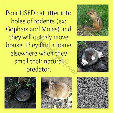 how to get rid of bunnies in backyard how to get rid of bunnies in backyard 28 images how to