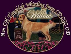 golden retriever breeders ma golden retriever breeders massachusetts dogs our friends photo