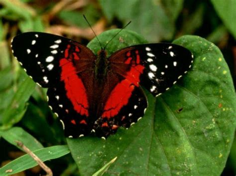 of a butterfly cats parrots and butterflies images butterfly hd wallpaper