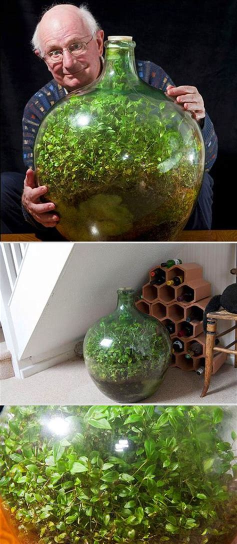 sealed bottle garden in a beautiful exle of a closed but functional