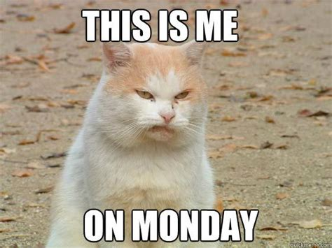 Monday Cat Meme - monday cat memes quickmeme