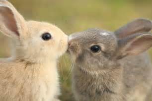 tout sur le lapin et nain