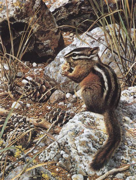 carl brenders wildlife paintings harvest time chipmunk image