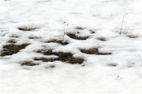 picture of snow snow melt new hshire garden solutions