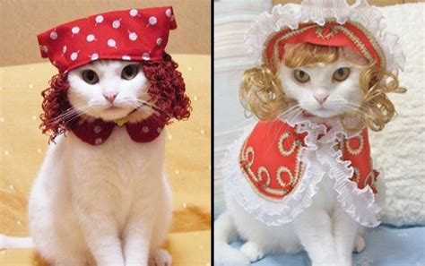 Dress Anak Carterpillar the those japanese cat costumes world wide whiskers