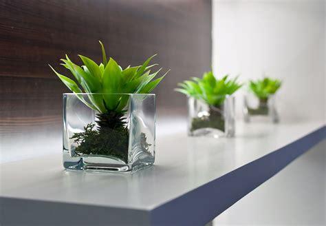 pflanzen für die wohnung moderne wohnzimmer gestaltung