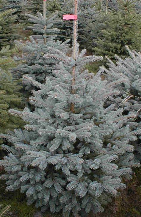 weihnachtsbaum handel
