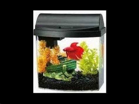 cara membuat aquascape ikan cupang cara membuat akuarium mini yang keren youtube