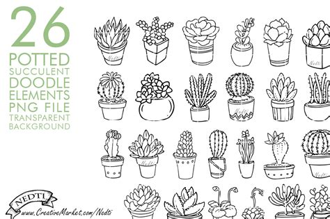 potted succulent cactus hand drawn illustrations on