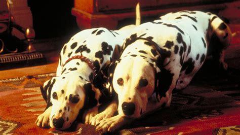 101 dalmatians 1996 puppies www pixshark com images