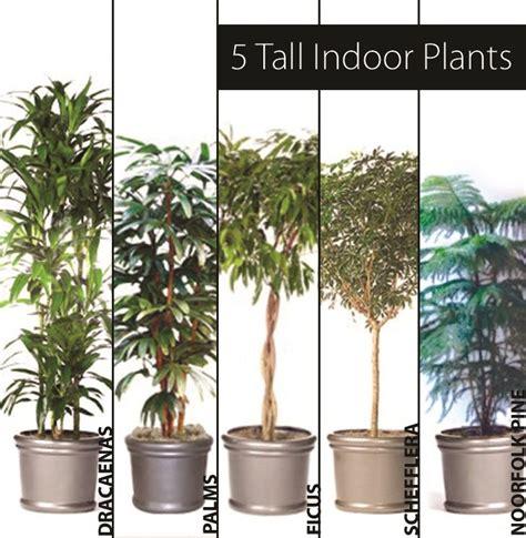 best tall indoor plants best 25 tall indoor plants ideas on pinterest