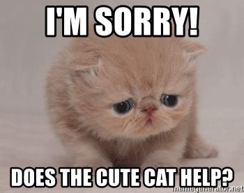 I Am Sorry Meme - i m sorry does the cute cat help super sad cat meme