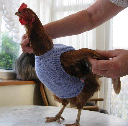 pattern crochet chicken sweater knitted chicken sweaters free patterns patterns free