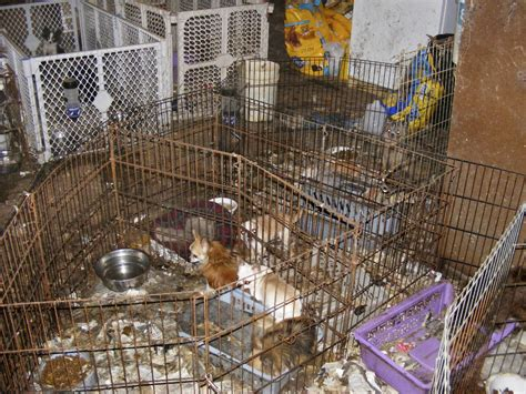 are puppy mills agencies will help breeders comply with puppy mill in oregon oregonlive