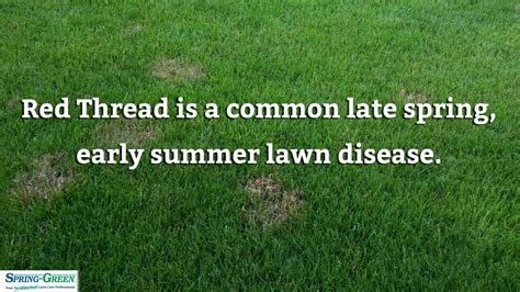 late summer lawn care summer lawn care interesting lawn care infographic with