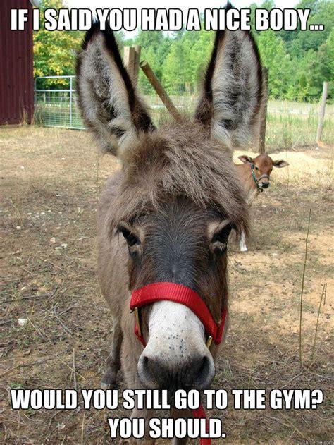 nativity donkey memes