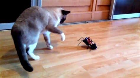 En Diy Bo Spider Robot diy arduspider robot battles household pets beats other gifts