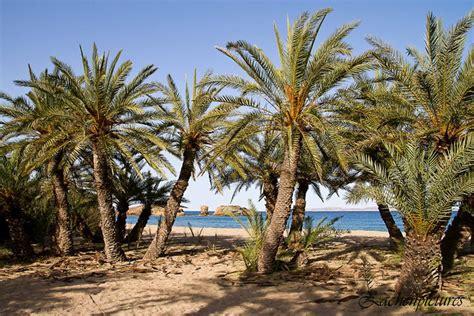 vai palm beachcretegreece vai palm beachcretegreece