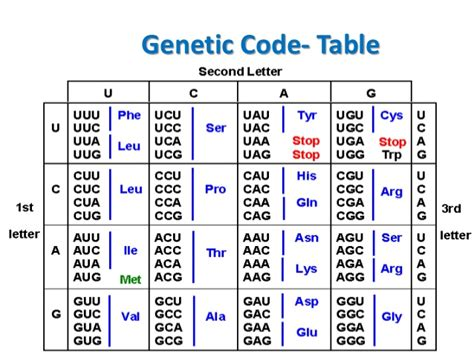 Genetic Code Table by Genetic Code And Mutation