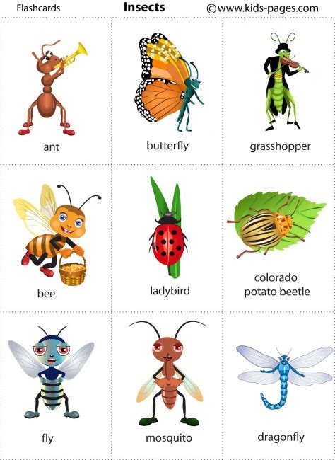 Printable Insect Flash Cards | insects flashcard