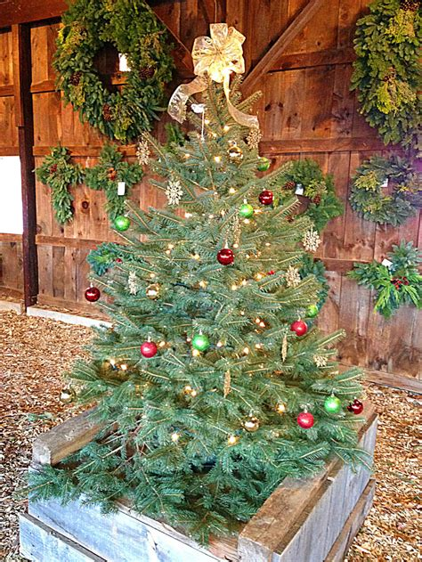 christmas tree season begins at jones farms and fairview