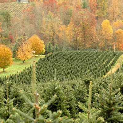 christmas tree farms in clovis california the best motorcycle roads in america