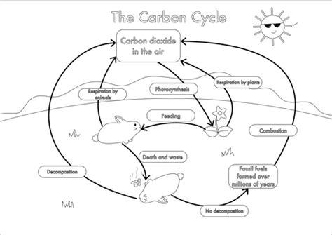 carbon cycle diagram worksheet printables carbon cycle worksheets beyoncenetworth
